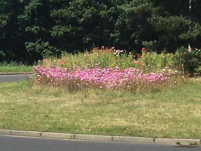 Chicken Roundabout Wildflowers 2